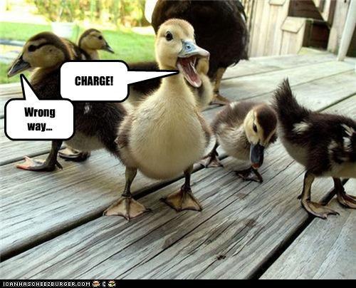 CHARGE! Wrong way...