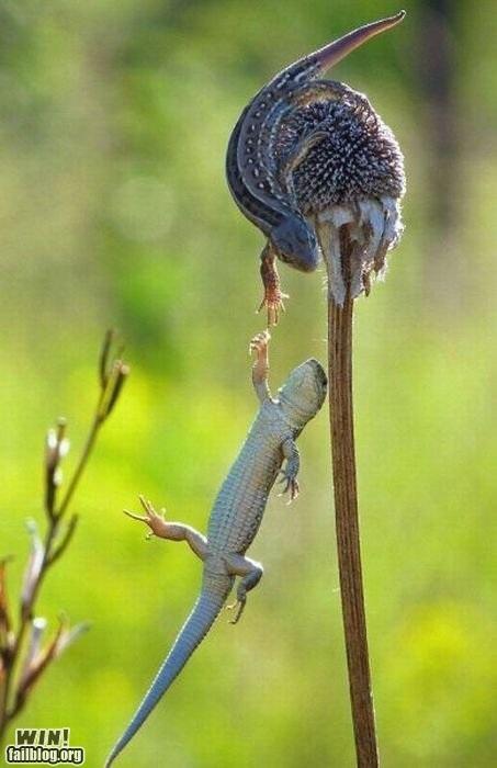 lizards mother nature ftw - 4888292096