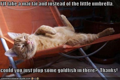 caption,captioned,cat,chair,do want,drink,goldfish,instead,little,mai tai,order,relaxing,replacement,tabby,thanks,umbrella