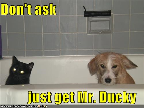 ask,bath,bath tub,cat,do not want,dont,ducky,get,just,puppy,tub,whatbreed