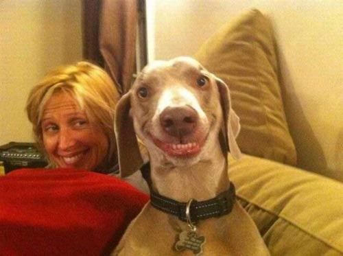 Anthropomorphized Animal,doggeh,Happy Hound