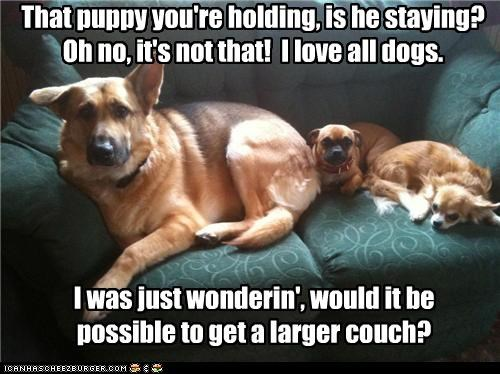 I was just wonderin', would it be possible to get a larger couch? That puppy you're holding, is he staying? Oh no, it's not that! I love all dogs.