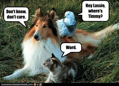Hey Lassie, where's Timmy? Don't know, don't care. Word.