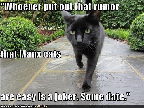 """Whoever put out that rumor that Manx cats are easy is a joker. Some date."""
