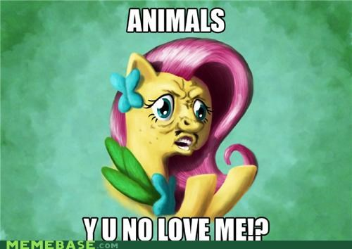 animals Bronies fluttershy love Y U No Guy - 4889604864