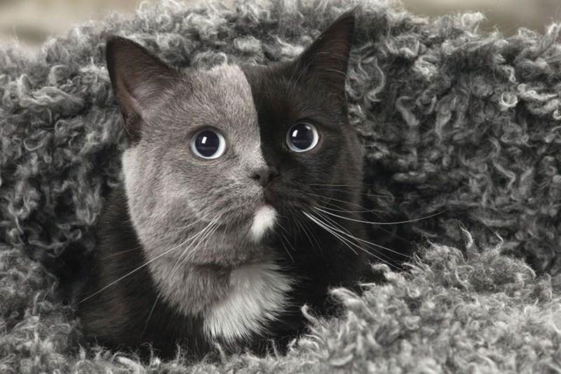 face color rare Cats - 4889861