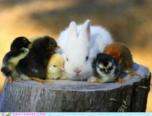 Babies,baby,bunny,chick,chicks,feature,Hall of Fame,Interspecies Love,new,tuesday,tuesdays,weekly
