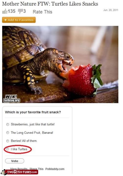 failblog failblog fail misspell turtles