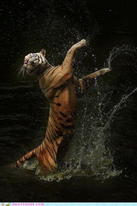 acting like animals ballerina ballet black swan correction dancer dancing Hall of Fame Movie quote tiger wait - 4890093312