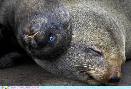 baby combination cuddling parent Pillow seal seals - 4890121216
