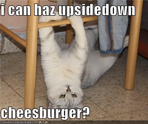 Cheezburger Image 4890516224