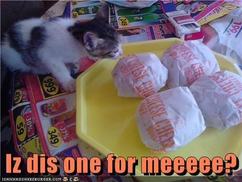 Cheezburger Image 4891793152