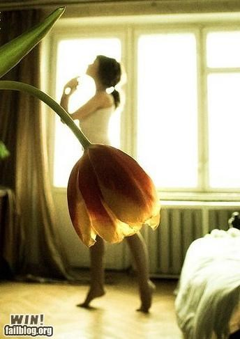 ballerina,ballet,clothes,dancer,flowers,photography,positiong