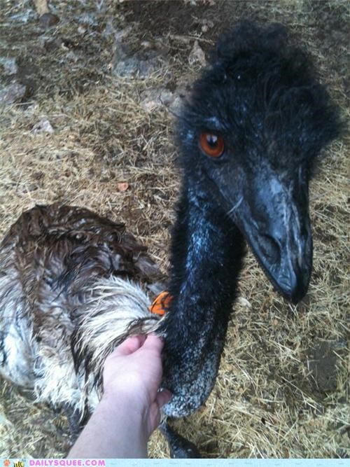 bath bathing do want emu neck reader squees scratches water - 4893142272