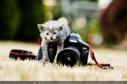 camera climbing confused cyoot kitteh of teh day grass outside photography - 4893336320