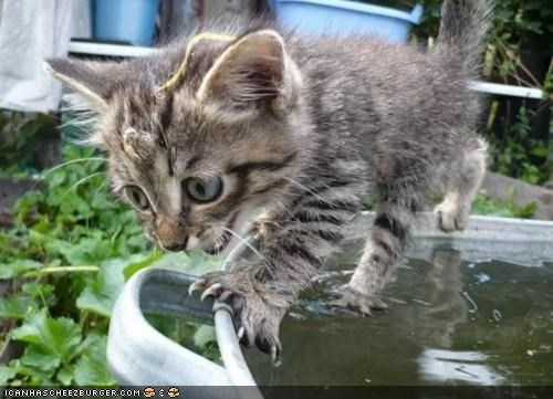 cyoot kitteh of teh day,mistake,oops,scared,trashcan,unhappy,water