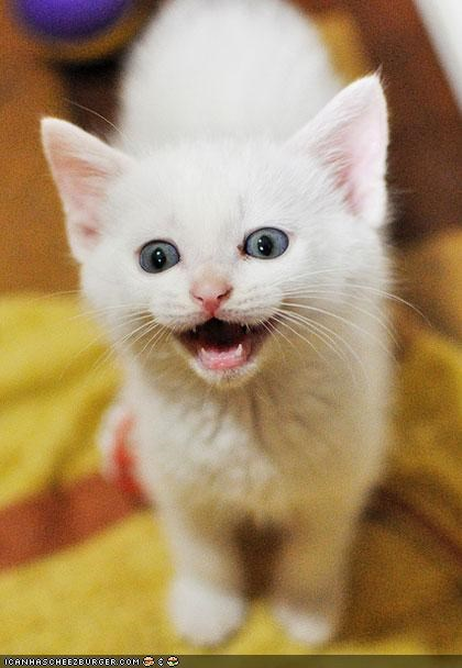 Awkward cyoot kitteh of teh day happy mouth open smile teeth - 4893345280