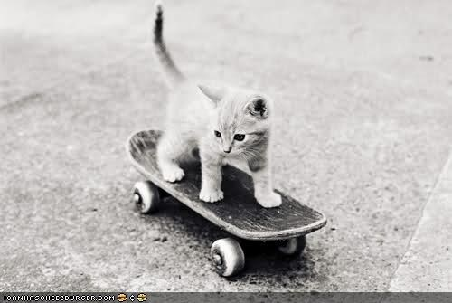 black and white,cyoot kitteh of teh day,skateboard,skating,skills