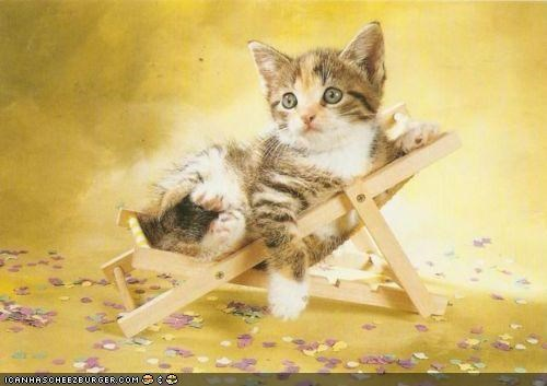 cyoot kitteh of teh day - 4893361920