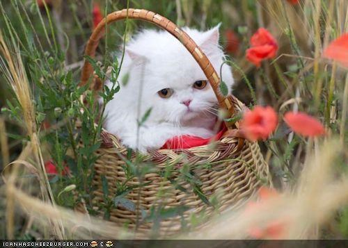 basket,cyoot kitteh of teh day,field,flowers,grumpy,unhappy