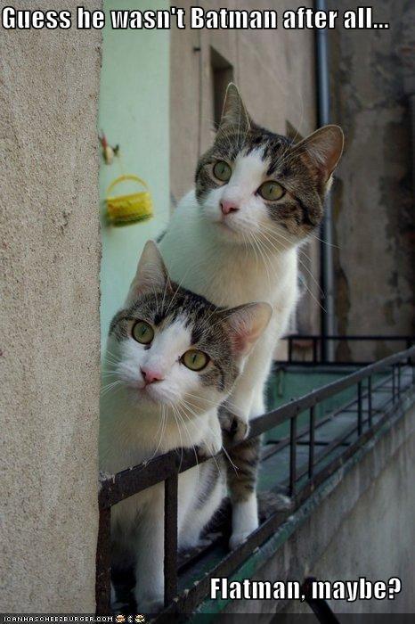 batman caption captioned cat Cats flatman guess not injury pain surprised - 4893384960