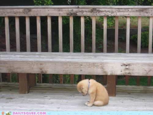 acting like animals ashamed explaining Hall of Fame moping pouting puppy Sad shame story - 4893725696