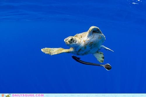 acting like animals bragging insulting sea turtle swimming talking smack - 4893737728