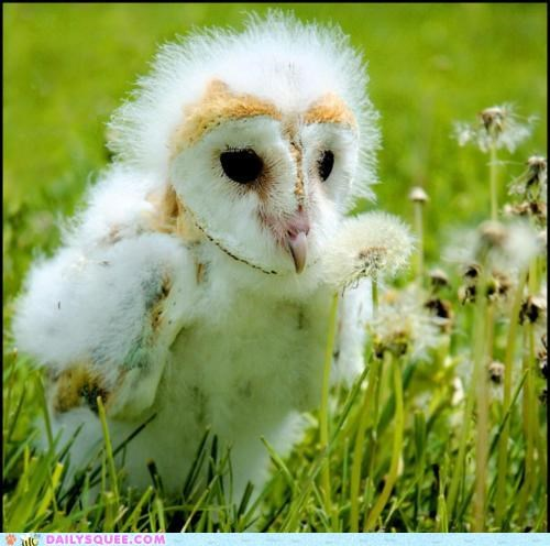 adorable baby down downy fuzz fuzzy Hall of Fame itty bitty molting Owl shock static tiny worried