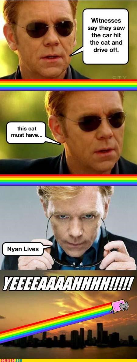 9 lives,csi,Nyan Cat,the internets