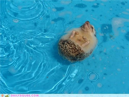 back,content,facebook,floating,friend,Hall of Fame,happy,hedgehog,life,living,reader squees,swimming