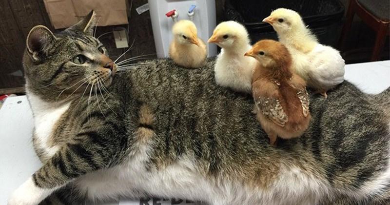 poniendo cosas en gatos