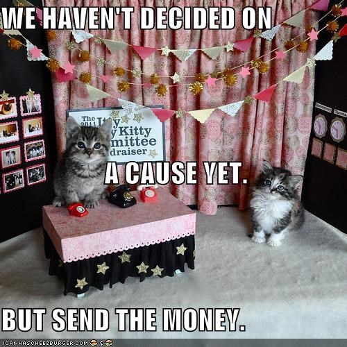 but caption captioned cat Cats cause charity decided decision do want havent kitten money please send we - 4895780864