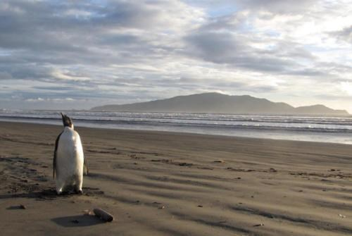 happy face Lost Penguin new zealand North Shore Peka Peka Beach Right Turn At Albuquerque - 4896111872