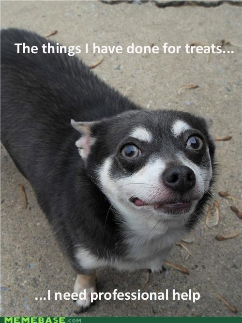 delicious help kibble Memes Sad treats trouble - 4896156928