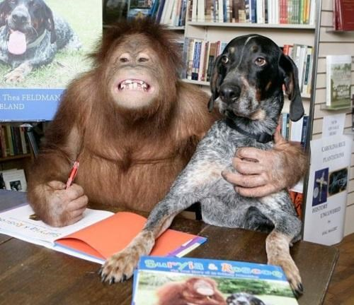 doggeh interspecies interminglin orangutan - 4896294144