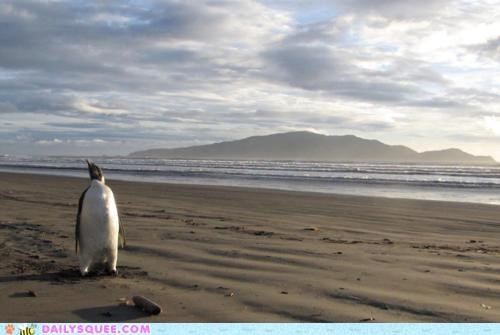 antarctica,confused,emperor penguin,found,interesting,lost,new zealand,relocated,strange,traveling
