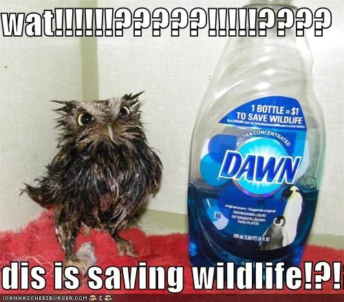 caption captioned confused do not want label Owl saving soap wat wet what wildlife - 4896571648