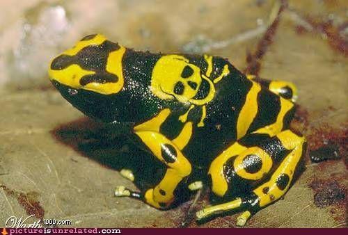 frog poison venomous wtf - 4896673536