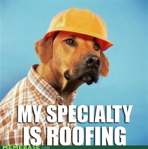 bark builder dogs Memes puns roof - 4896725248