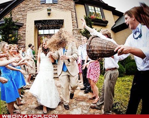 birdseed,bride,funny wedding photos,groom