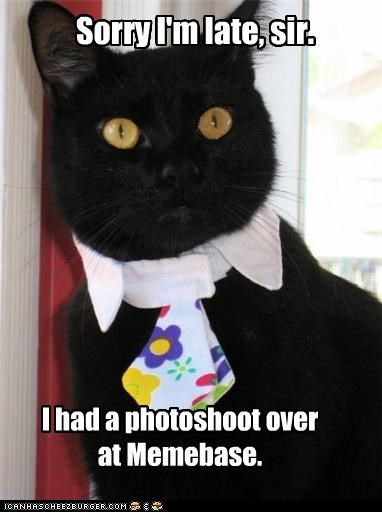 caption,captioned,cat,explanation,late,memebase,photo shoot,sir,sorry,tie