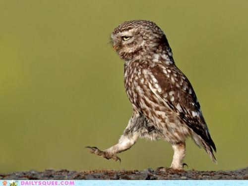acting like animals,haters gonna hate,meme,Owl,strut,strutting,swagger