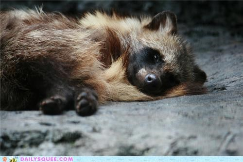 awesome,beautiful,break,glamor,jealous,jelliez,posing,squee spree,tanuki