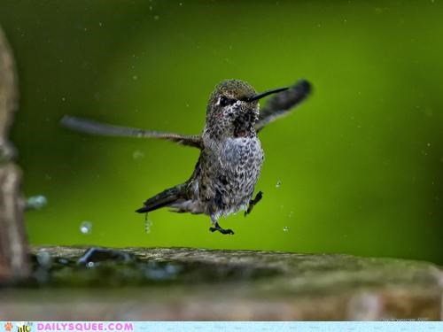 acting like animals,balancing,carefree,clumsy,excited,FAIL,frolicking,happy,hummingbird,ledge,reveling,summer