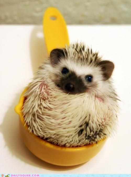 baby Hall of Fame hedgehog ingredient measuring cup pun recipe secret sitting tiny - 4897469696