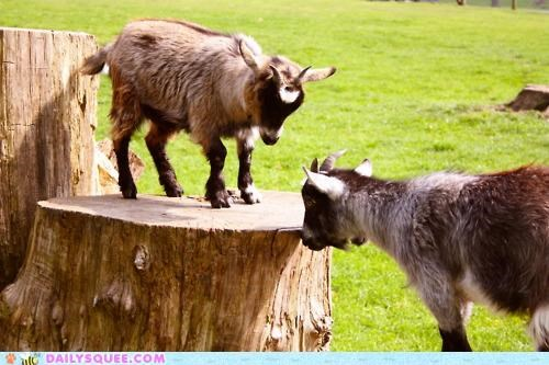 attitude baby calf doesnt goat matter size standing stump - 4897479168