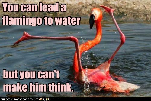 You can lead a flamingo to water but you can't make him think.