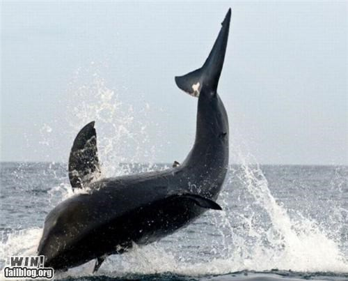 awesome jumping mother nature ftw the ocean whales - 4898197248