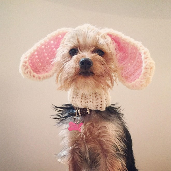 dogs cute style fashion hats Cats funny - 4898309