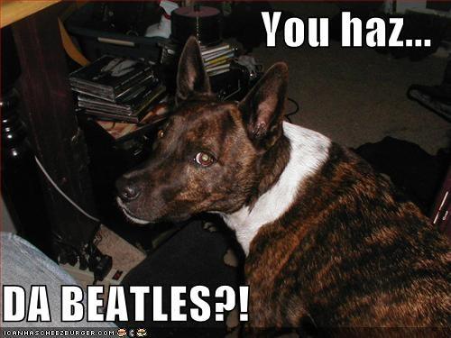 You Haz Da Beatles I Has A Hotdog Dog Pictures Funny